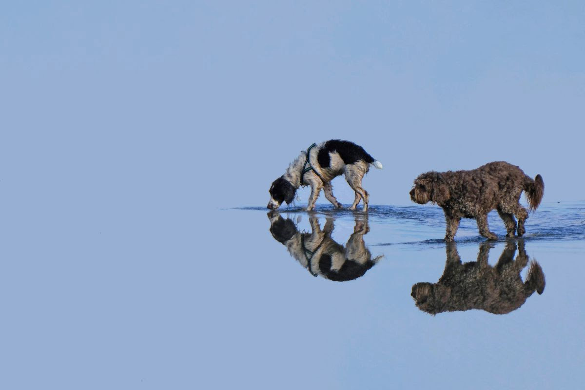 Blackrock Dublin Reflections